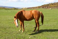 Free A Beautiful Horse Stock Image - 3556941