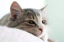 Free Cat On Sofa Stock Photos - 3557413
