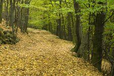 Free Autumn Walk Way Royalty Free Stock Image - 3558006