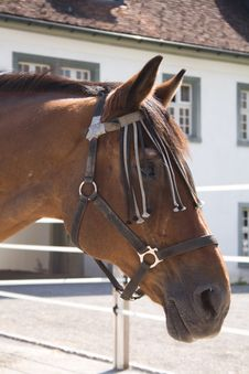 Free Horse Head Stock Photography - 3558462