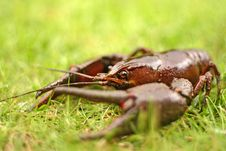Free Crayfish Eye Stock Image - 3559291
