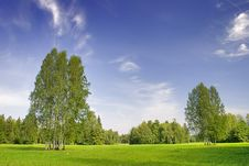 Free Green  Birches Stock Photography - 3559342