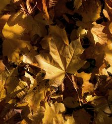 Free Autumn Leaves Stock Photography - 3559432