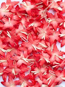 Free Handicraft Paper Flower Royalty Free Stock Photos - 35502618