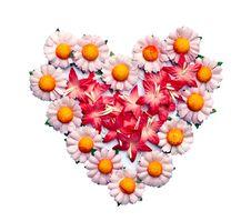 Free Handicraft Paper Flower Royalty Free Stock Photo - 35502655