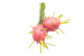 Free Dragon Fruit Royalty Free Stock Image - 35514326