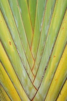 Free Palm Trunk Stock Photo - 35513110