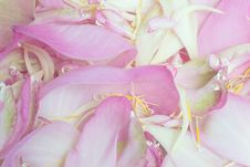 Free Petal Lotus Background Royalty Free Stock Photography - 35513317