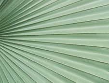Free Palm Leaves Stock Photos - 35513573