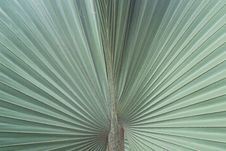 Free Palm Leaves Stock Photos - 35513793