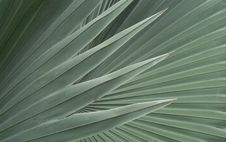 Free Palm Leaves Stock Photo - 35513800