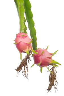 Free Dragon Fruit Royalty Free Stock Images - 35514019