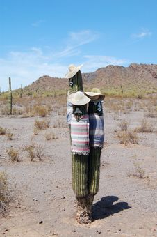 Free 3 Amigos Cactus Stock Photography - 35514642