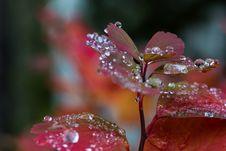 Rain On Leaves III Stock Photography