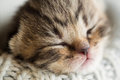 Free Newborn Sleeping Baby Kitten Stock Photo - 35535770