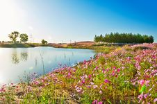 Free The Lake And Flowers Royalty Free Stock Photography - 35532047