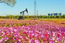 Free The Pink Flowers And Pumping Unit Stock Images - 35532084