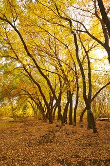Free The Golden Leaves Royalty Free Stock Images - 35532719