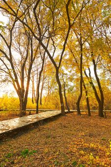 Free The Golden Autumn And Fallen Leaves Sunset Royalty Free Stock Photo - 35532875