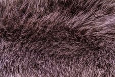 Beaver Fur Royalty Free Stock Images