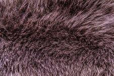 Beaver Fur Royalty Free Stock Images