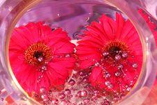 Free Daisy Decoration Royalty Free Stock Photo - 35536535