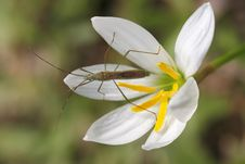 Free Insect On White Flower Stock Images - 35537144