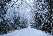 Free Winter Landscape With The Forest And The Road Royalty Free Stock Photo - 35537515