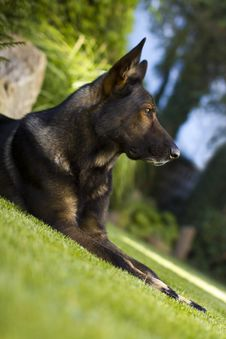 Free Beautiful Garden Dog Royalty Free Stock Photos - 35538618