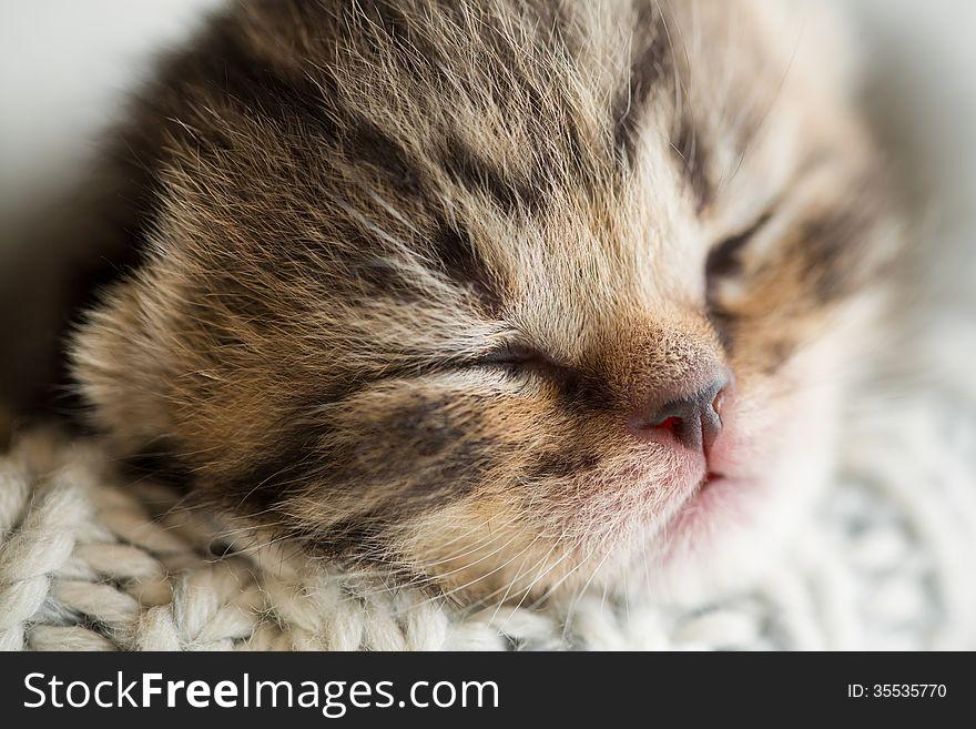 Newborn sleeping baby kitten