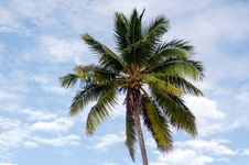 Free Coconut Tree In Aitutaki Lagoon Cook Islands Royalty Free Stock Photo - 35541195