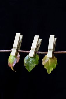 Free Clothespins With Leaves Stock Image - 35549821
