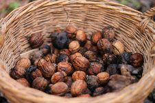 Free Walnuts In The Basket Stock Photos - 35550623