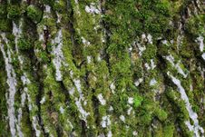 Free Moss Stock Photography - 35550792