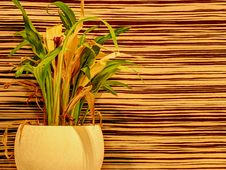 Free Houseplant On Abstract Background Royalty Free Stock Photo - 35553415