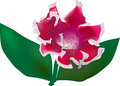Free Red Gloxinia Isolated On White Background Stock Image - 35564571