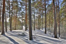Free Landscape With Snow Pines In Forest Stock Photos - 35564633