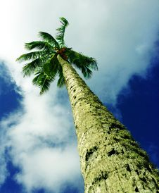 Free Reaching For The Sky Royalty Free Stock Images - 35565929
