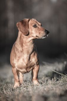 Free Dog Stock Images - 35566484