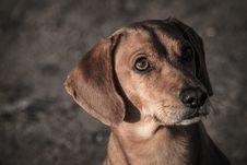 Free Dog Royalty Free Stock Photography - 35566627