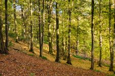 Free Allen Banks Autumn Trees Stock Photography - 35572172
