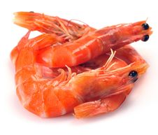 Free Fresh Shrimp Royalty Free Stock Photos - 35576908
