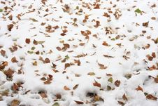 Free Yellow Leaves In The Snow Royalty Free Stock Image - 35577436