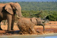 Free Elephants Splashing Water Royalty Free Stock Images - 35577549
