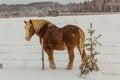 Free Farm Horse Stock Photo - 35585840
