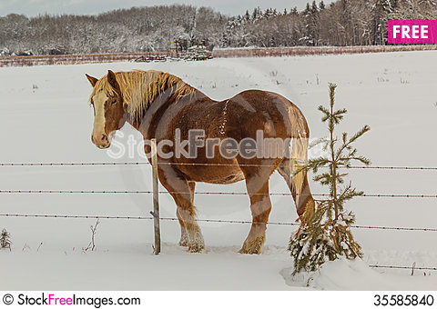Free Farm Horse Stock Photo - 35585840