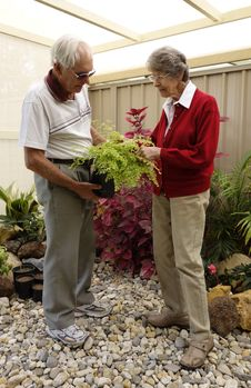 Free Elderly Couple In Fernery Stock Photos - 35588163