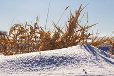Brown Grass On A Snow Drift Stock Photo