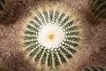 Free Close Up Of Globe Shaped Cactus Stock Photo - 35590300