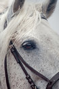 Free Grey Horses Eye Royalty Free Stock Images - 35597489